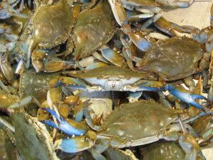 Blue Crabs!